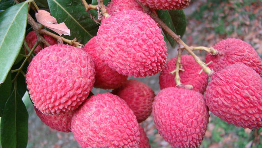 LYCHEES  By Nakib Ahmed (Own work) [CC-BY-3.0 (http://creativecommons.org/licenses/by/3.0)], via Wikimedia Commons