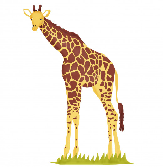 Giraffe - the tallest animal in the world