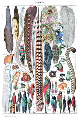A picture that beautifully illustrates the sheer variety of feathers found in modern birds.
