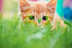 Soft Claws: Alternative to Declawing