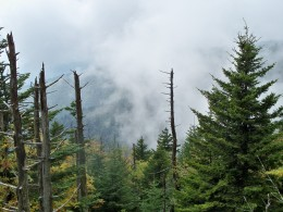 Views of the Coniferious Rainforest