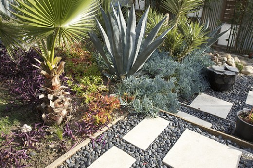A water-wise xeriscape. Photo by Jeremy Levine Designs.