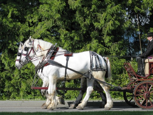 Exploring the park in a horse-drawn carriage is an enjoyable activity.