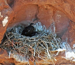 In the nest.
