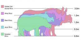 Rhino species size comparison Indian Rhinoceros, over 1.8m White Rhinoceros, 1.8m Black Rhinoceros, over 1.5m Javan Rhinoceros, 1.5m Sumatran Rhinoceros, 1.4m