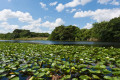 Photographing The Everglades;Home of the Alligator