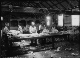Workers in a wool sorting room in Austrailia
