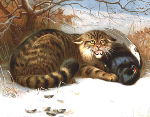 Scottish wildcat with black grouse carcass, as illustrated by Archibald Thorburn (1902)