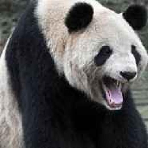 The Google Panda Algorithm