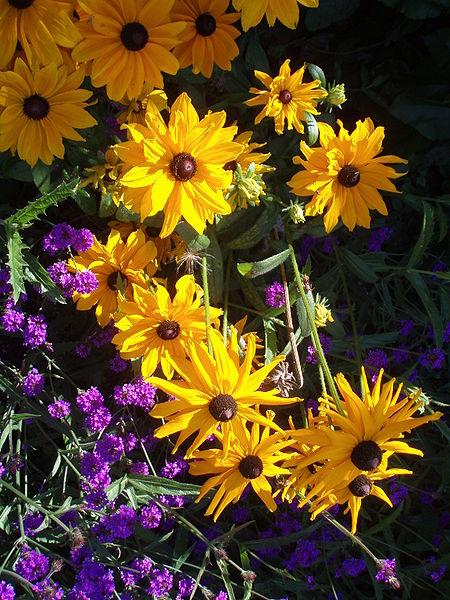 Spring Showers Summer Flowers