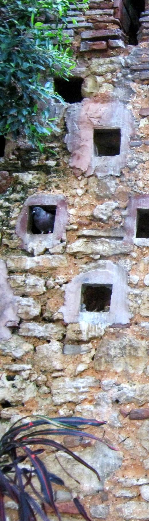 Old San Juan, PR, Pigeons Park