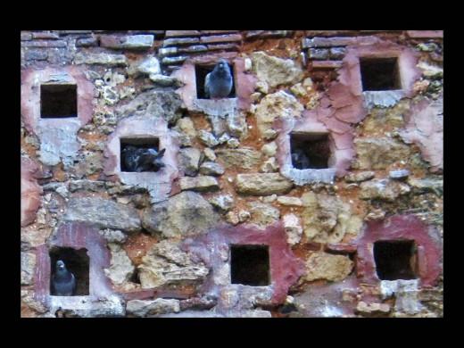 Pigeon's houses Old San Juan