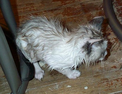 Knut after his first bath