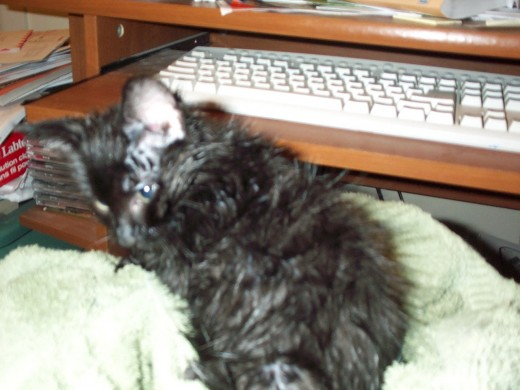 Spooky in his foster mom's lap drying after his first bath