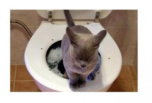 Stage two is the most difficult transition for your cat.  This is the first time he or she will see the hole leading to the water in the toilet.  Please be patient and give kitty lots of time to adjust.