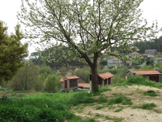 Collection of hórreos near Leiro