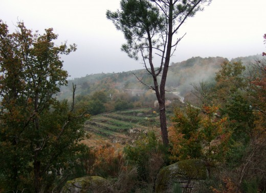 Winter view of a friend's vineyard near Cenlle