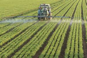 Organophosphates used as a pesticide in food