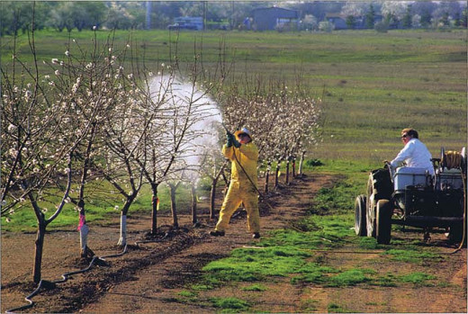 Organophosphate insecticide used on fruit trees