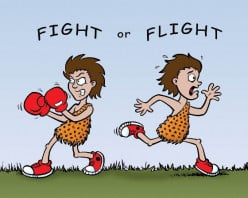 Fight or Flight Poem