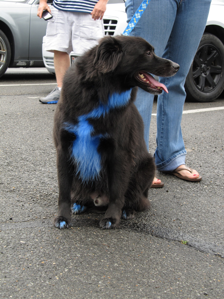Even our four legged friends know Mopar is the way to go!