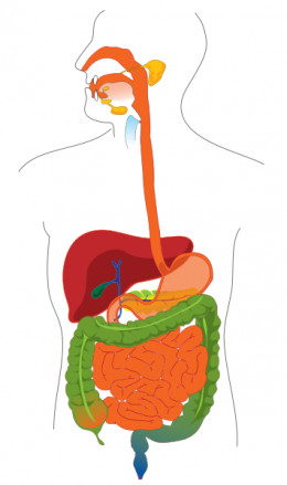 The digestive system, bacteria and food can all be causes of bad breath.