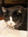 My name is Speedy.  I am a little shy but once you take me out of this scary cage I purr alot and love to be petted.  I'm a sweet girl and would love to curl up in the sun with you!