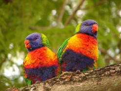 Photo Series-Love Birds
