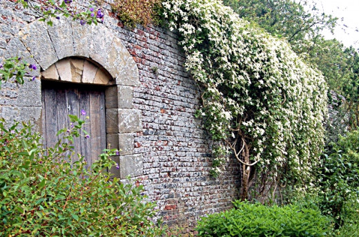 Vines and creepers make excellent wall coverings and garden elements