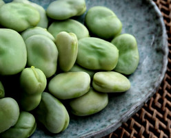 Fava Beans Health Benefits, Nutrition and Culinary Uses Broad Beans