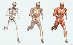 10 body parts that have no use to us
