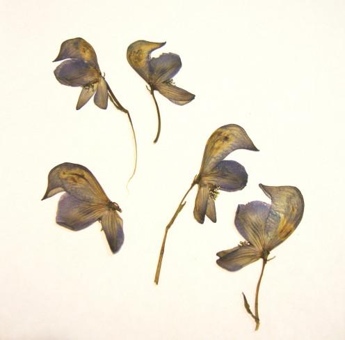 Image: Pretty Pressed Flowers