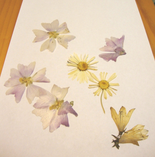 Image: Pressed Mallows, Daisies & Bluebells