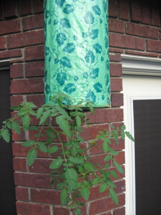 Topsy Turvy Planter in action