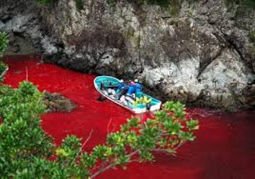 Blood bath in Taiji
