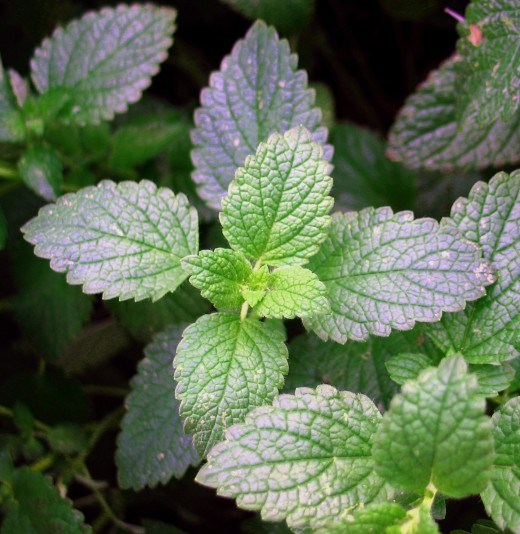 grow an herb garden for health benefits. Lemon balm, mint, rosemary and many other stress relieving herbs are beautiful and easy to grow.