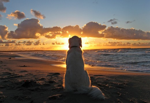 Dog Enjoys Beautiful Sunset. Onebigphoto.com