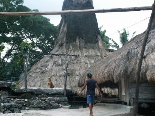 Ancestral villages - indonesia