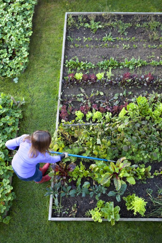 Get after those weeds! Use a sharp hoe for weeding row by row.