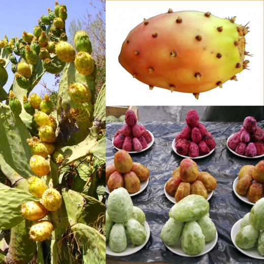 These are opuntia ficus indica or prickly pear fruits. They can be used to make juices, drinks, jams and jellies.