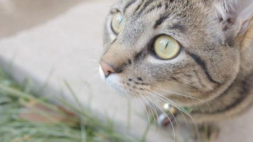 Close ups can bring out the best in your cat.