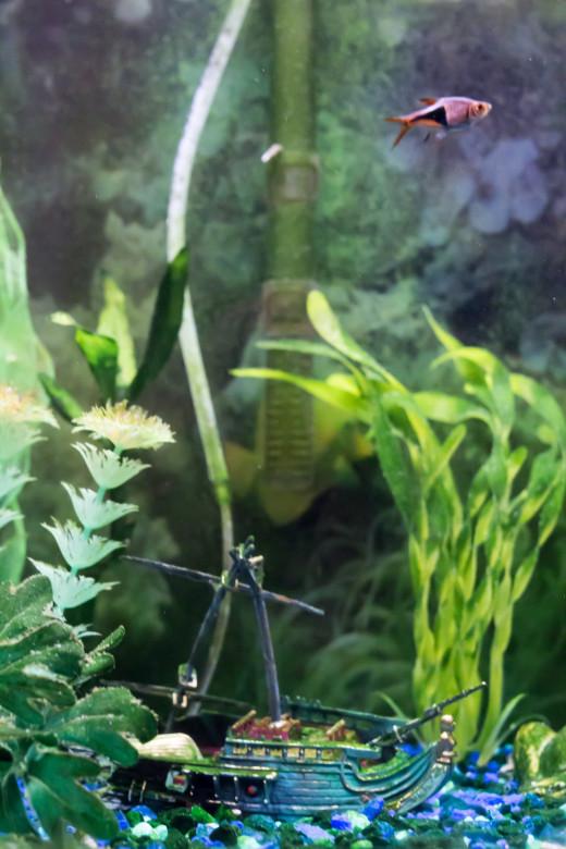 Beautiful colors in fish tanks.