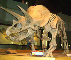 Are These Extinct Prehistoric Animals Still Alive Today?