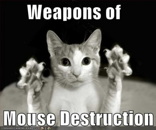 A good mouser is good to have around the house. Cats will not eliminate mice, but they will be more careful and low key.
