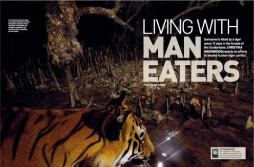Someone is killed by a tiger every 10 days in the forests of the Sundarbans.