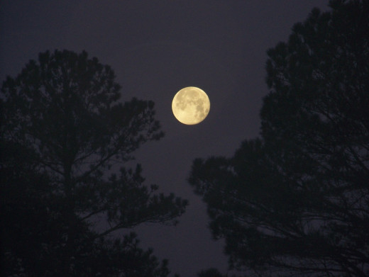 Moon Between Georgia Pines