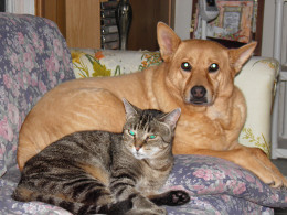 Bruno and Peanut BFF's (best friends forever)