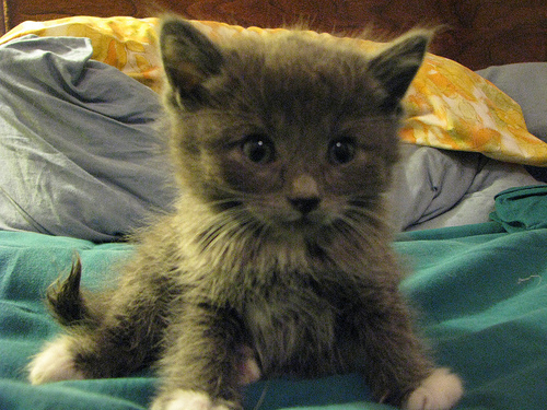 Here's a kitten to make you feel better!