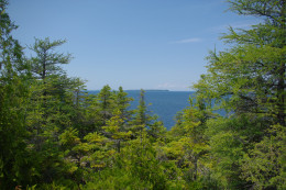 Contrast of green forest and blue water and sky.