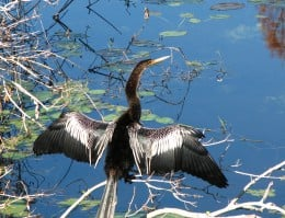 Beautiful plants and fascinating wildlife fill the Florida Botanical Gardens!